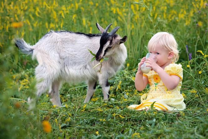 ребенок сидит на травке и пьет козье молочко