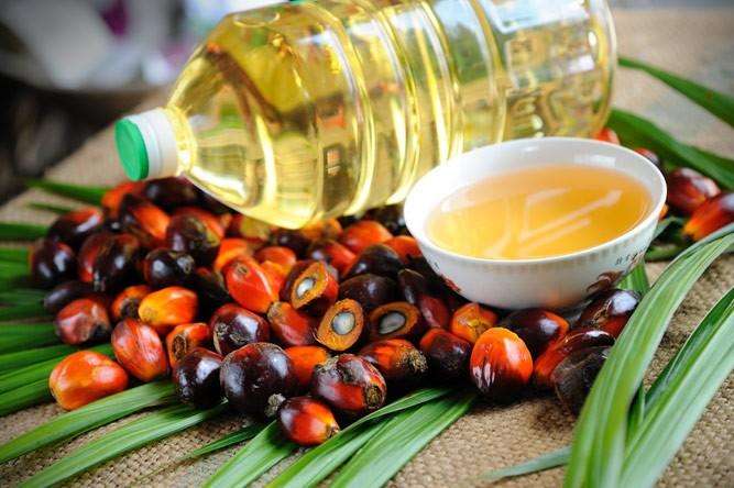 пальмовое масло и плоды масличной пальмы россыпью