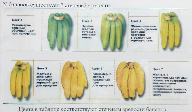стадии зрелости бананов