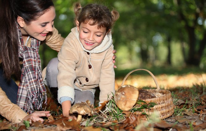 девочка собирает грибы с мамой