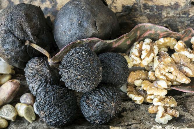 зрелый черный орех